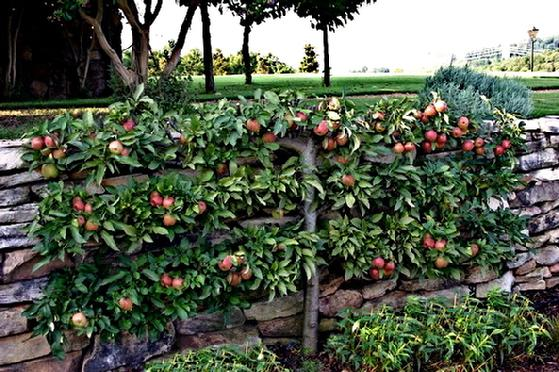 P Allen Smith Discusses Espaliered Fruit Trees River Road Farms