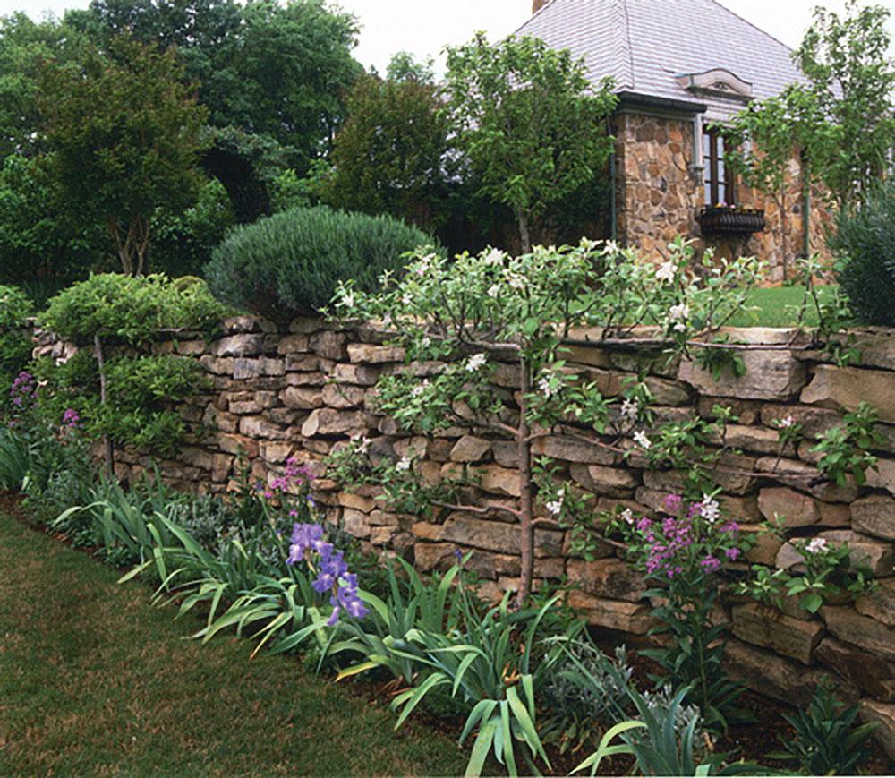 A three-tier horizontal cordon espaliered tree grows against a brick wall