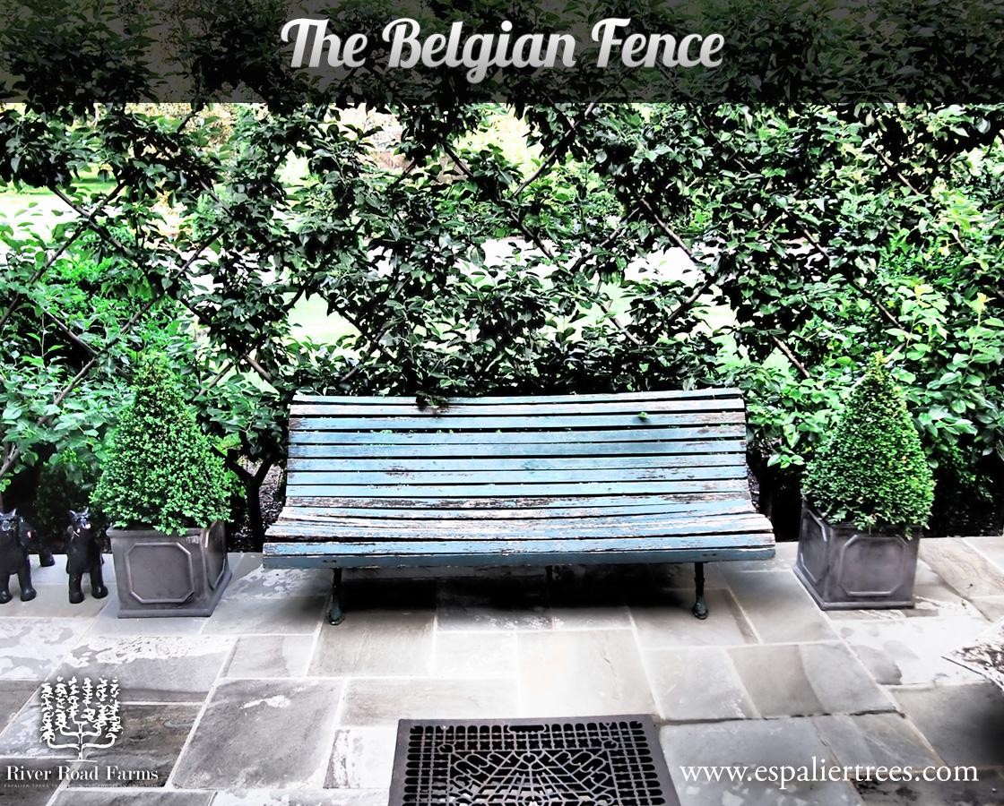 The-Belgian-Fence.jpg