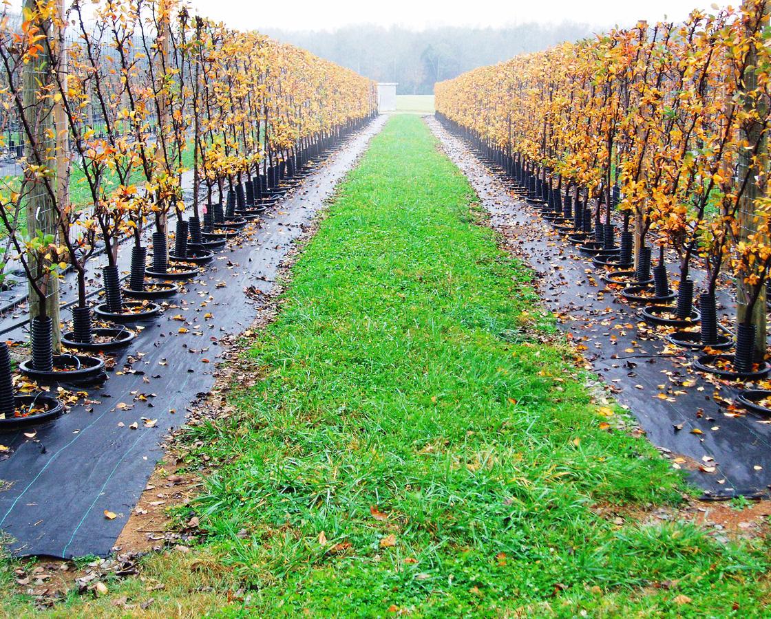 The-Belgian-Fence-Allée.jpg
