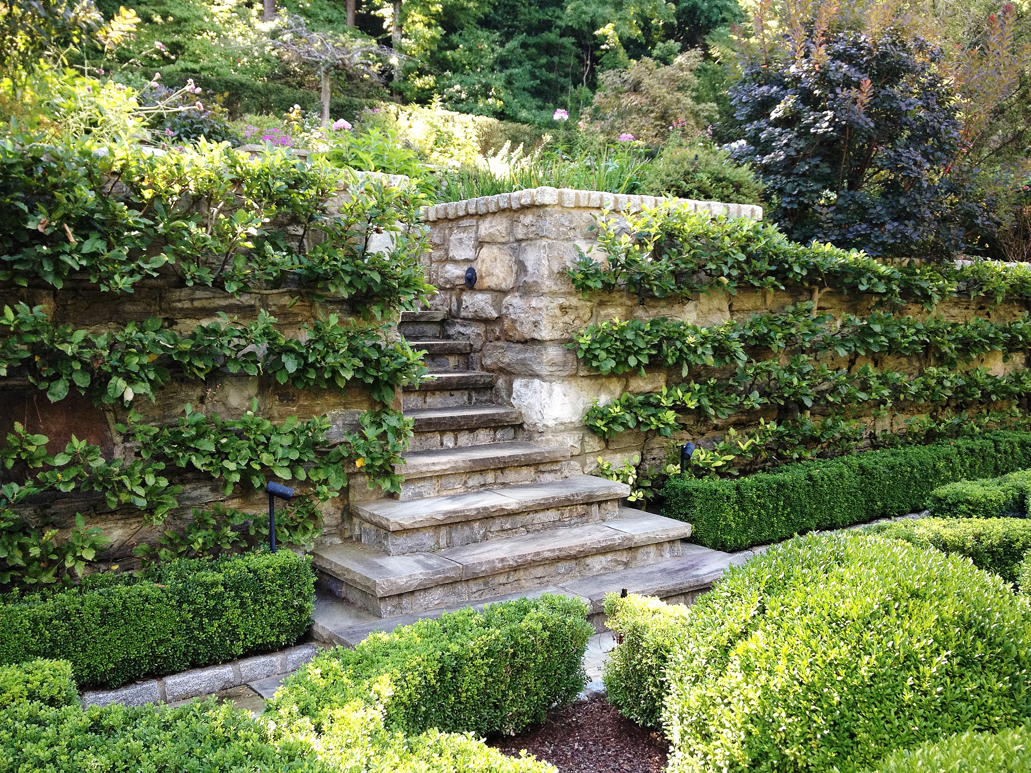 3-tier Horizontal Cordon Espalier