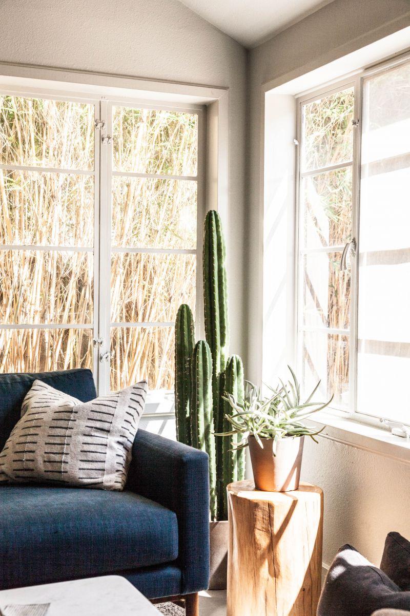 cactus14.jpg