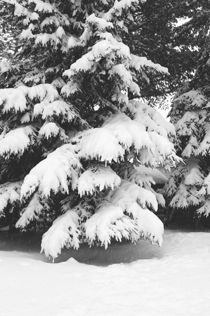 backyard+snowy+tree.jpg