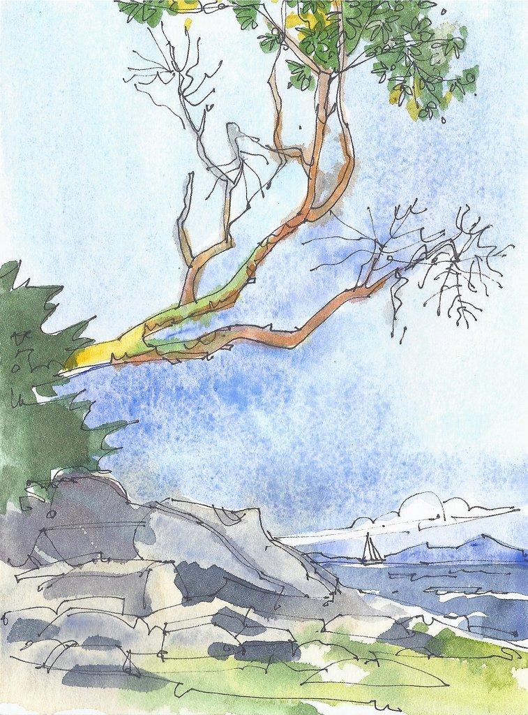 arbutus tree- Berry Point-6019898169.jpg