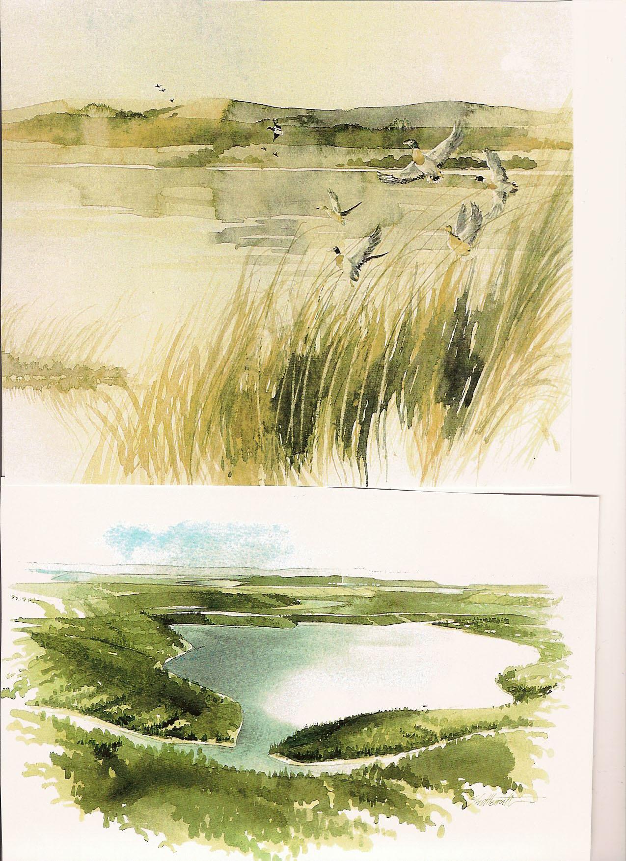reclaimed landscape-4352650964.jpg