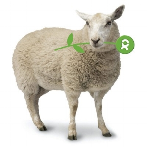 Donate a Sheep | Charity Gifts For A Family In Need