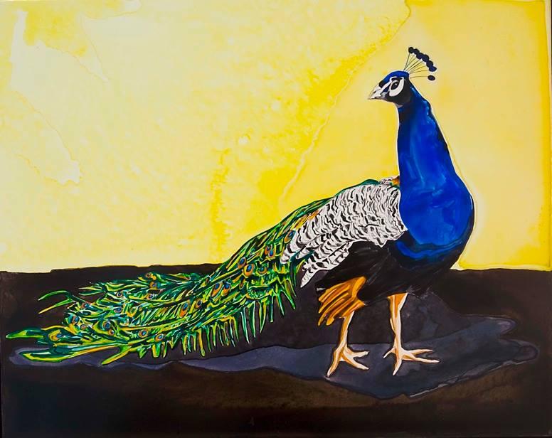 """Peacock Profile   watercolor   16"""" x 20"""""""
