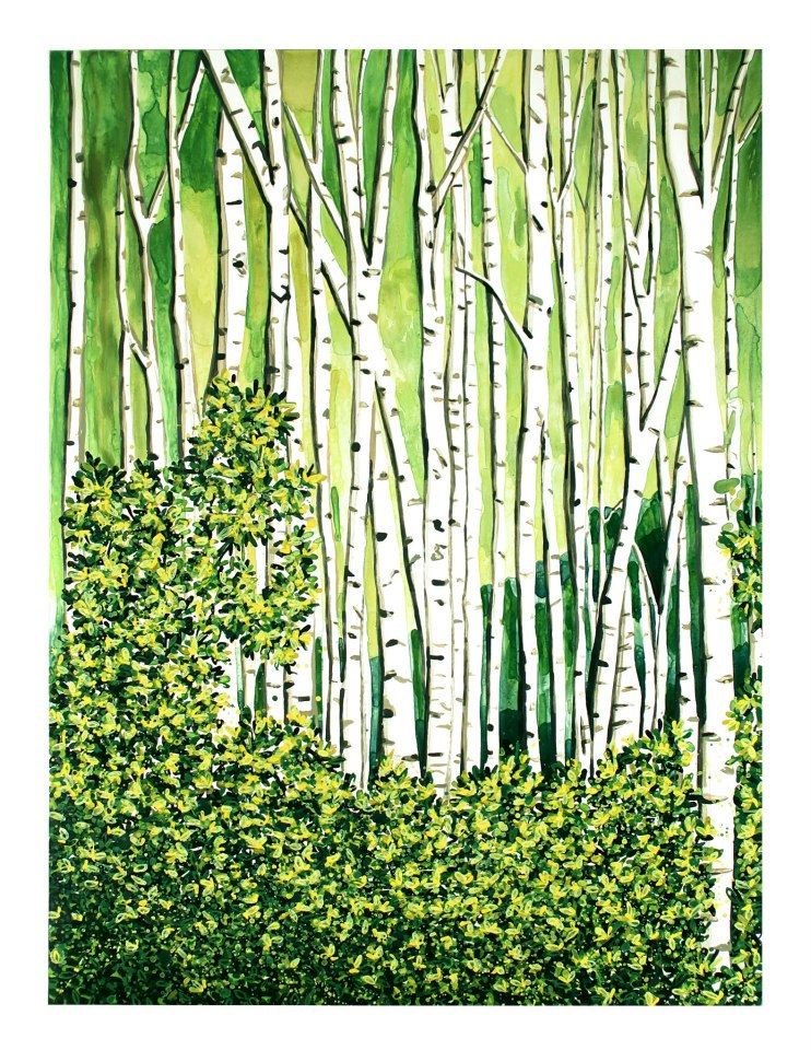 """Birch Forest   watercolor   40"""" x 30"""""""