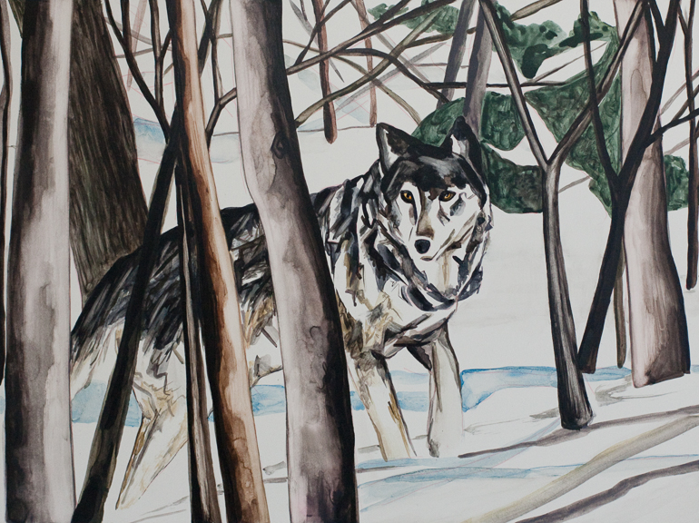 "Lone Wolf   watercolor   9"" x 12"""