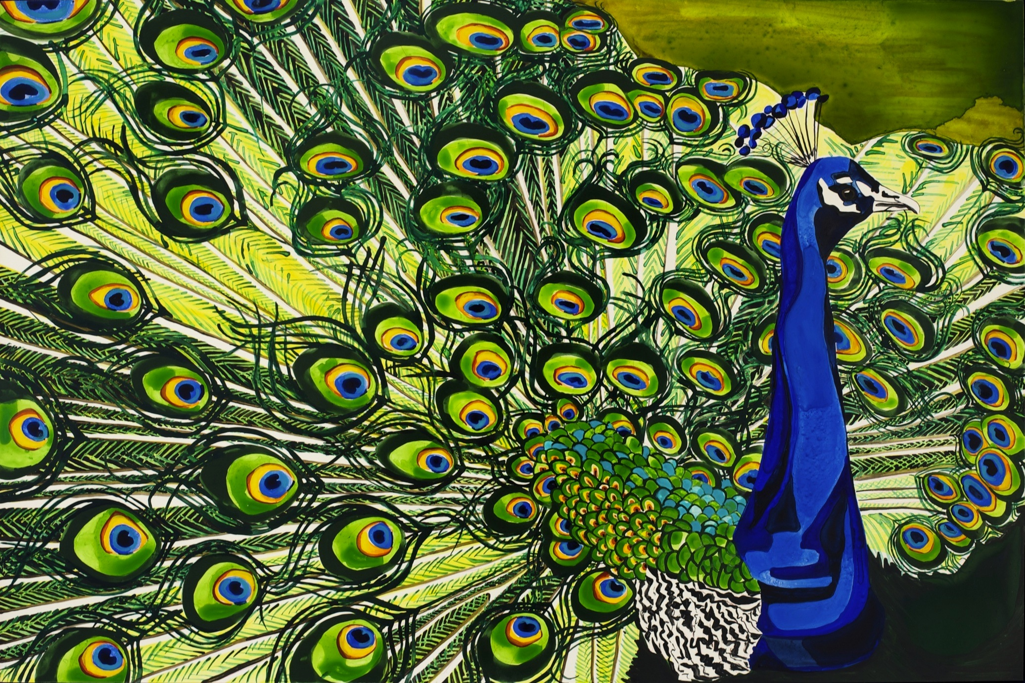 Amedeo peacock.jpg