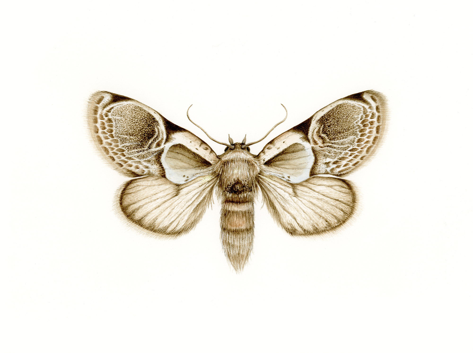 moth-1000.jpg