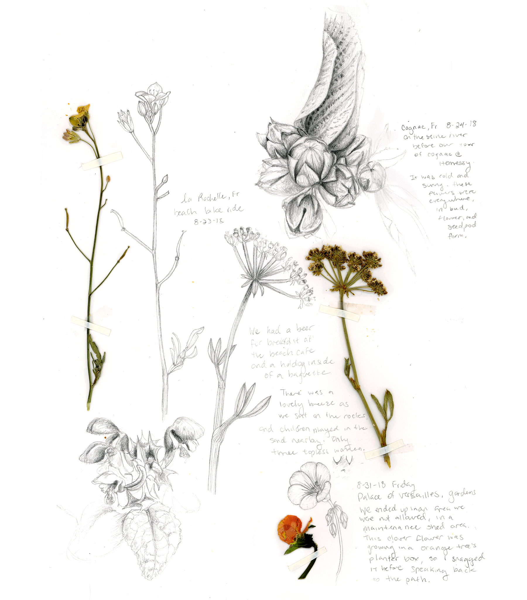A page in time - Flower pressings and sketches from our honeymoon