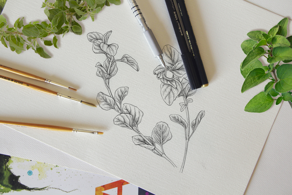 Using live specimens, we'll start with the fundamentals of botanical drawing and finish a composition in pen and ink.