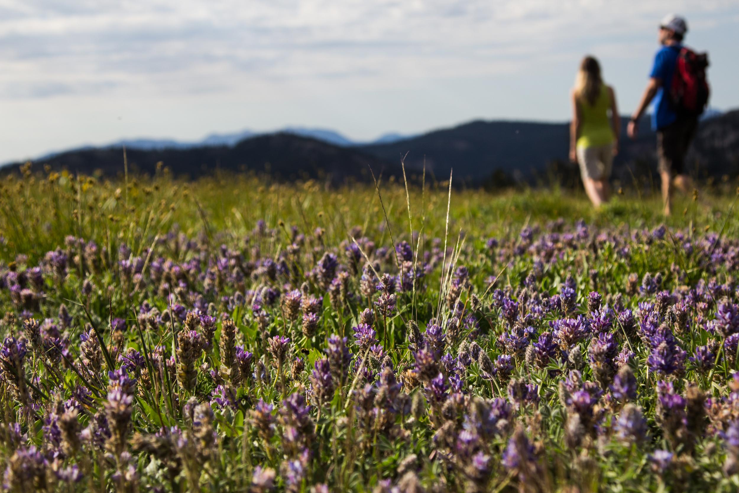 HighCamp_Wildflowers-22.jpg