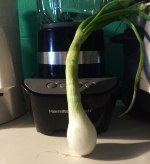 - Yes, it's a green onion.