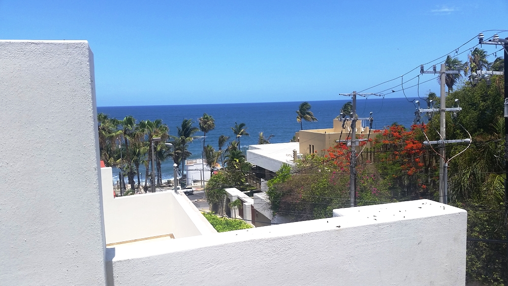 - Palm trees along the newly renovated malecon