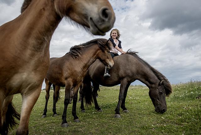 Langeland 5, heste