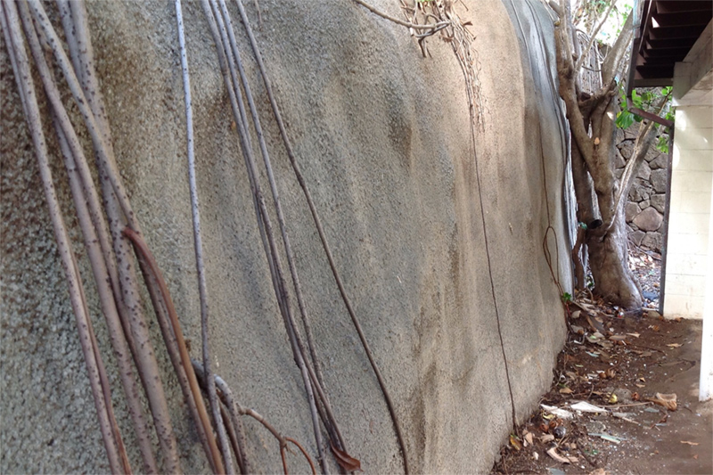 Roots - The roots system of the mature tree is venturing out beyond the retaining wall blocking the drainage system. This is blocking the escape of water and causing the large retaining wall to bulge. Eventually, this will be problematic.