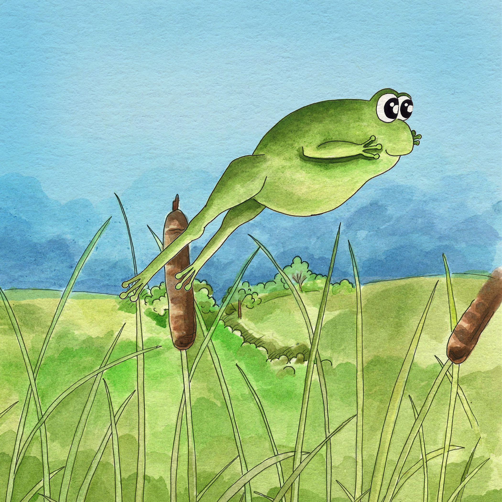 FrogIllustration.jpg
