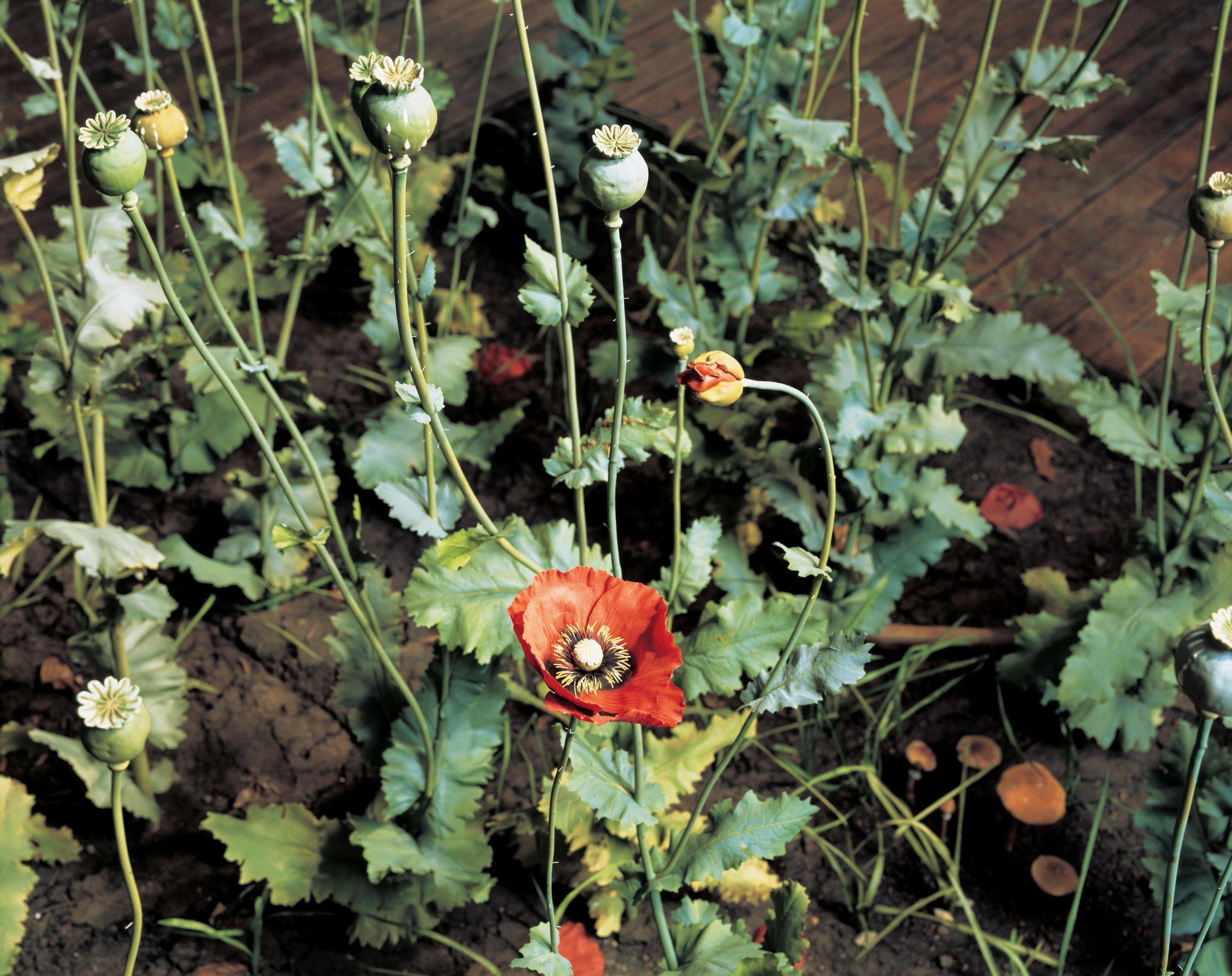 Crop  (detail) 1997
