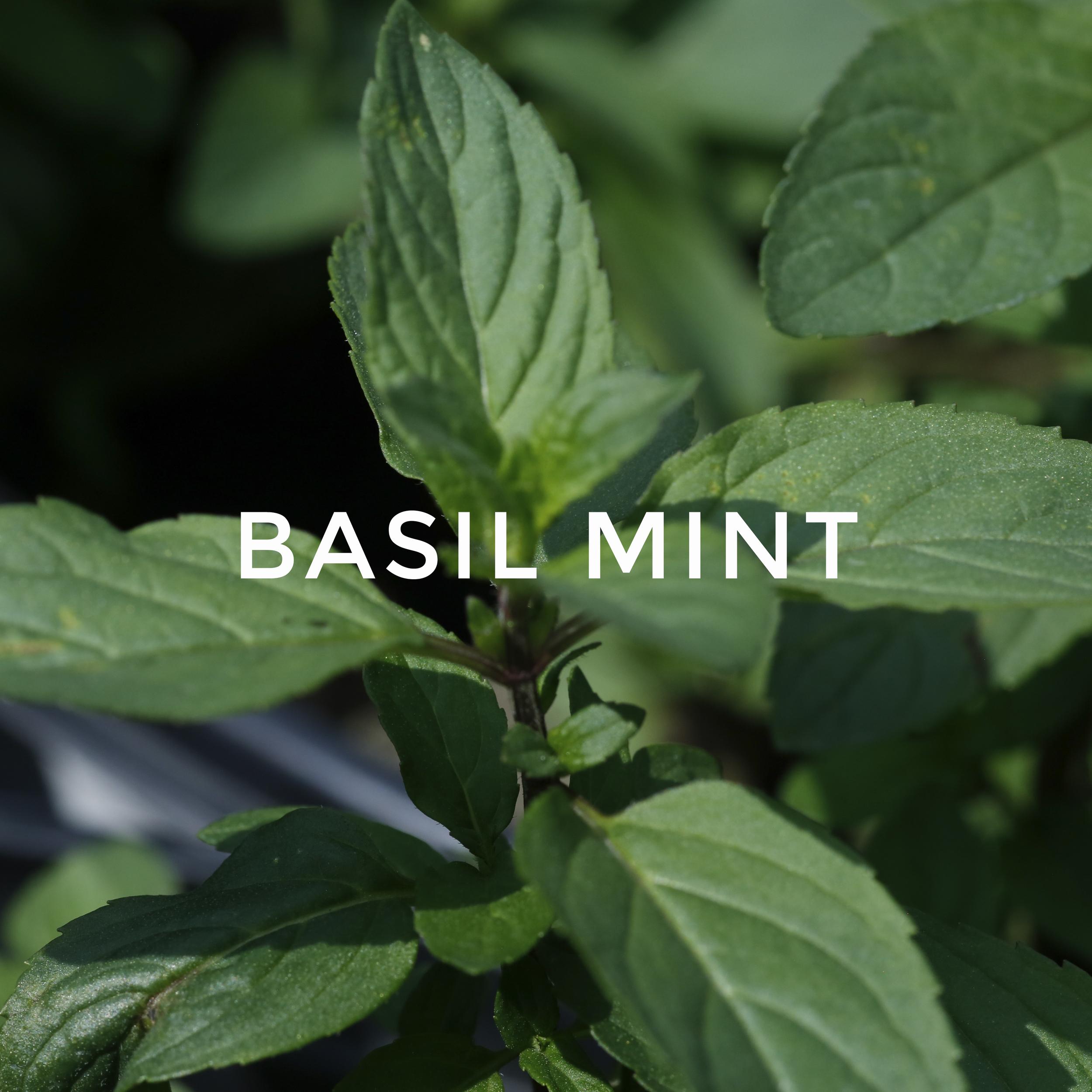 -44Basil Mint.jpg