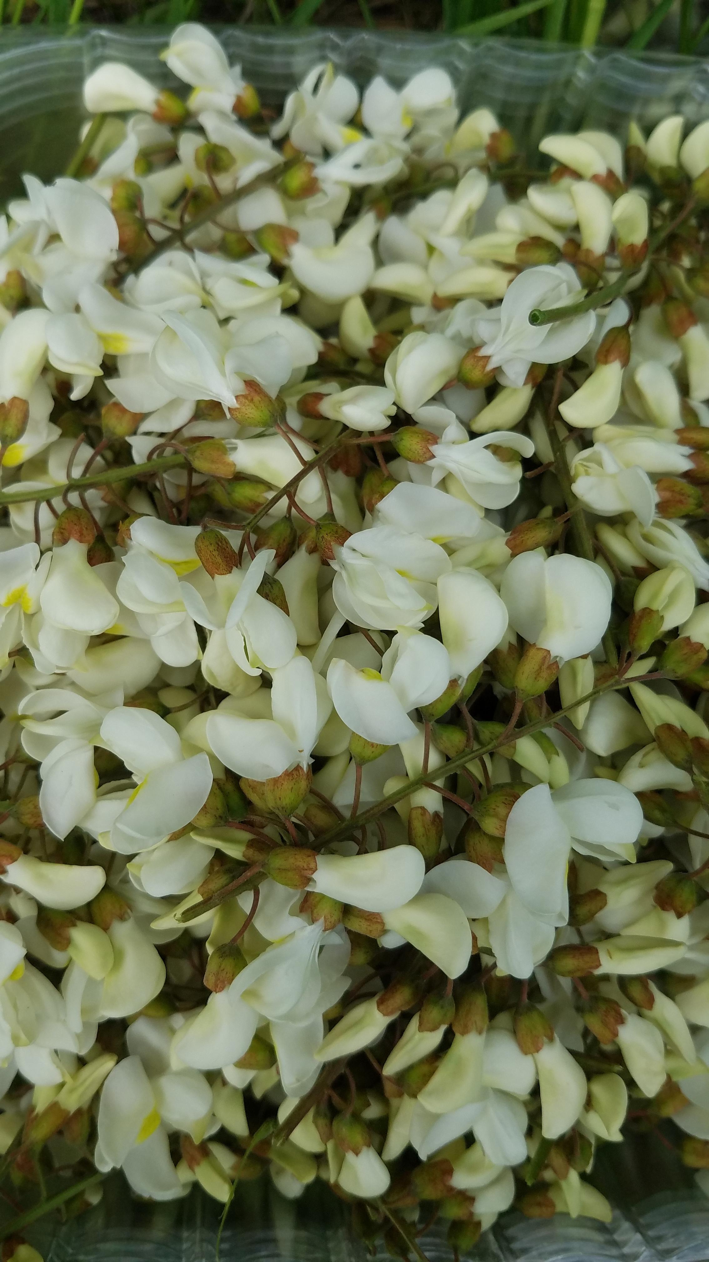 Black Locust Flowers
