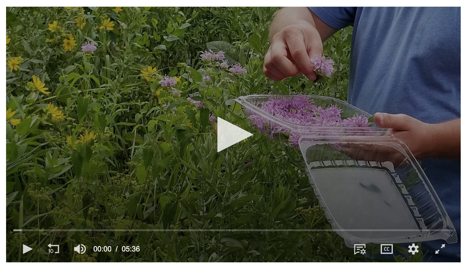 "WTTW - ""The Forager."" Dave Odd is a professional food forager who can identify more than 1,000 edible and medicinal plants and up to 250 species of mushrooms."