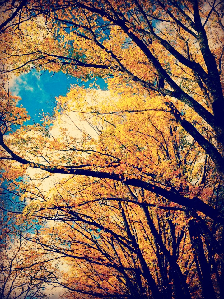 autumn shae leviston 2013.jpg