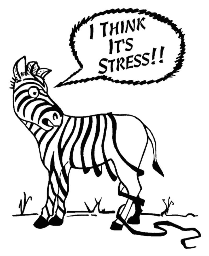 zebra-stress.jpg