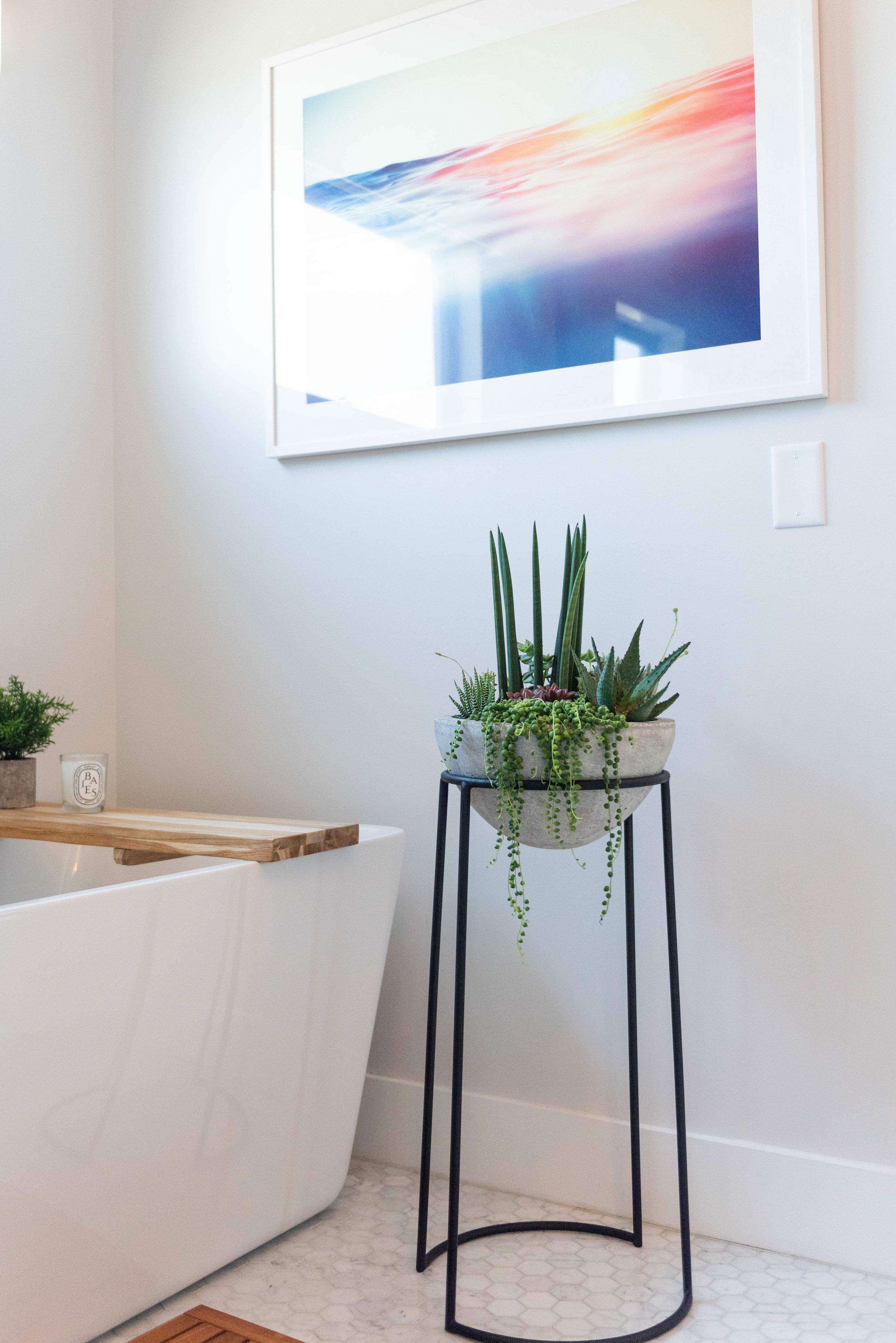 interior_plants-2.jpg