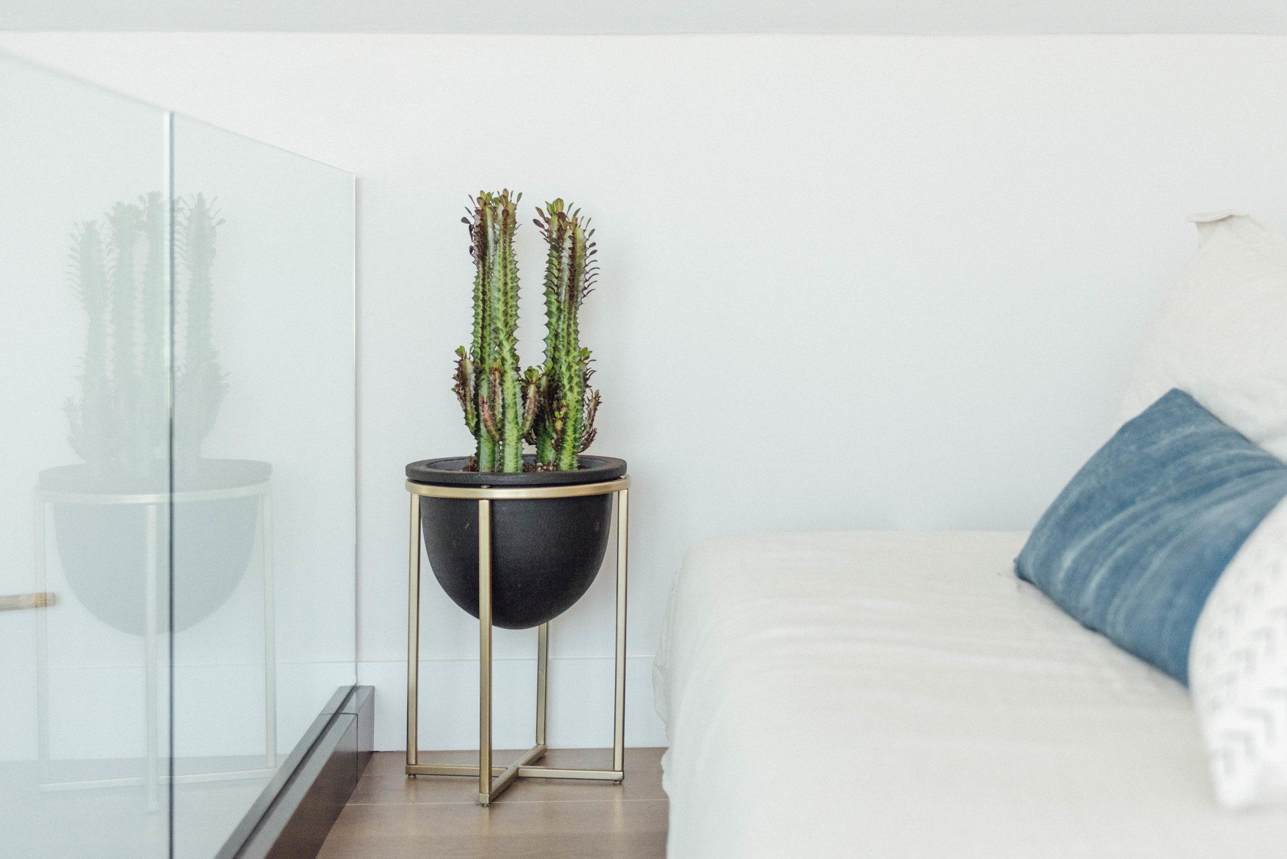 interior_plants-3.jpg