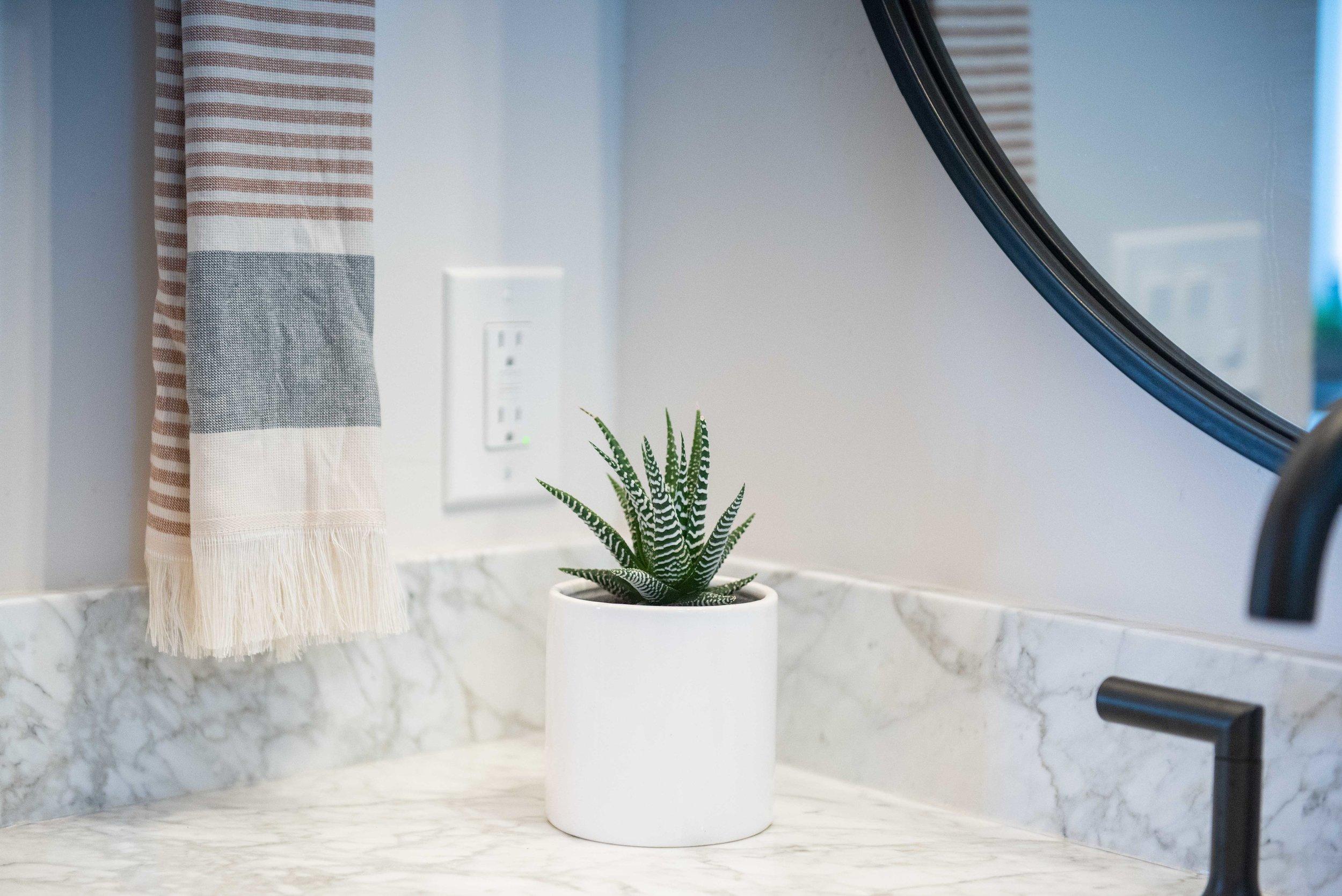 interior_plants-4.jpg