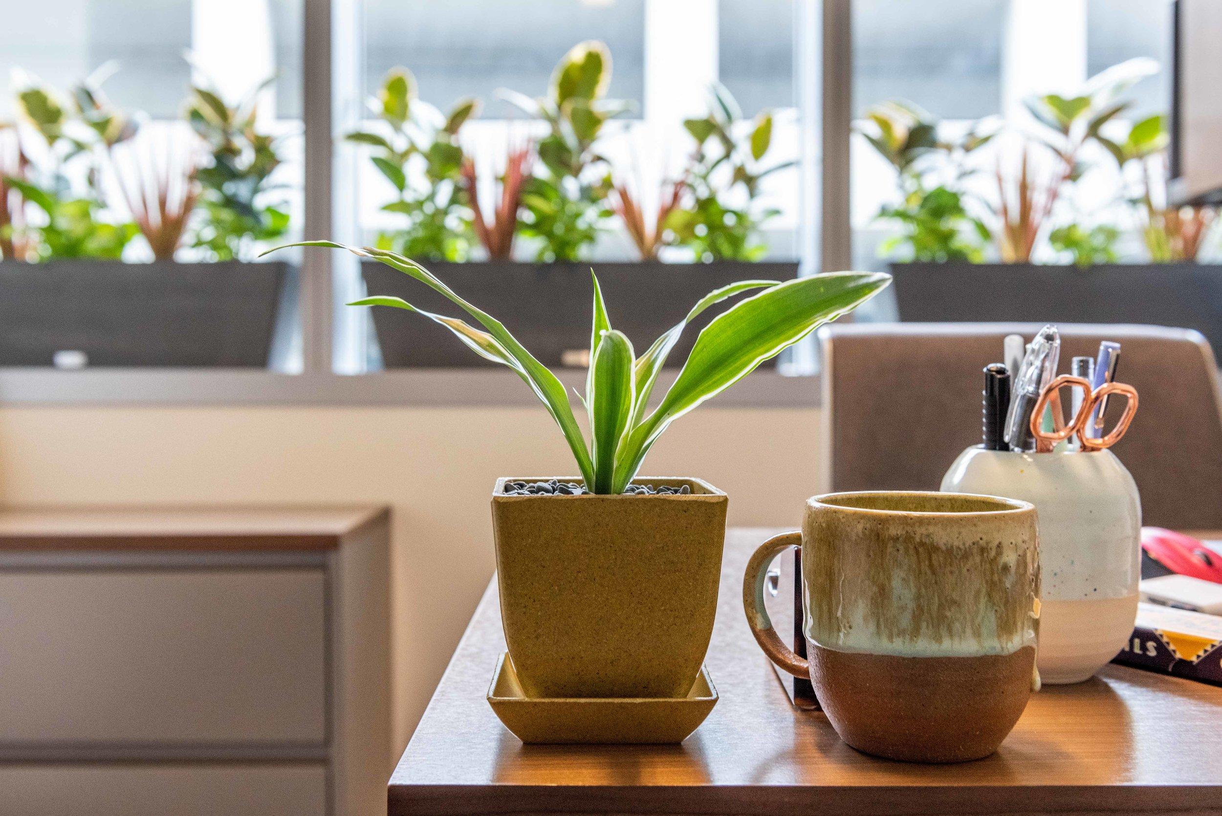 interior_plants-17.jpg