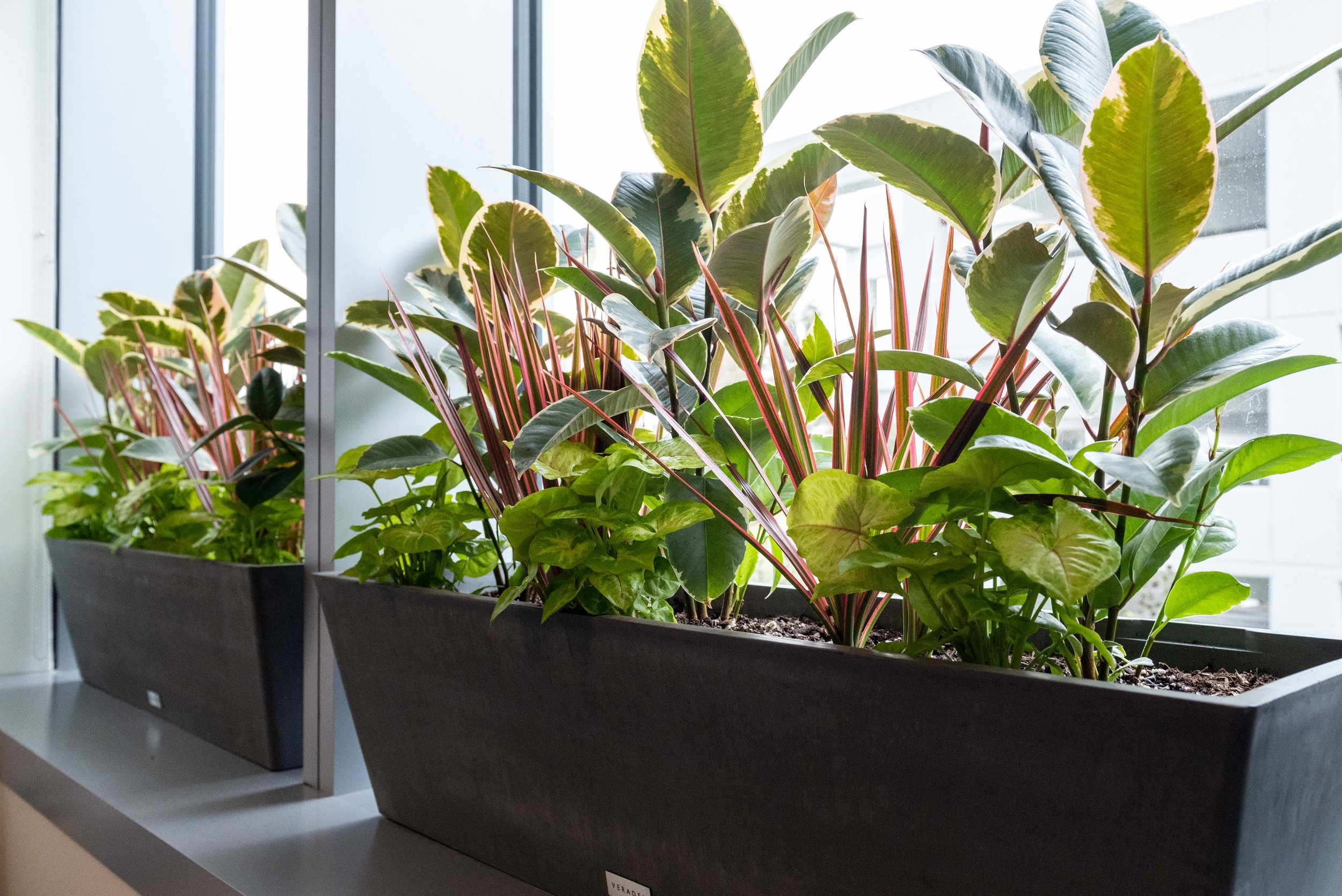 interior_plants-16.jpg