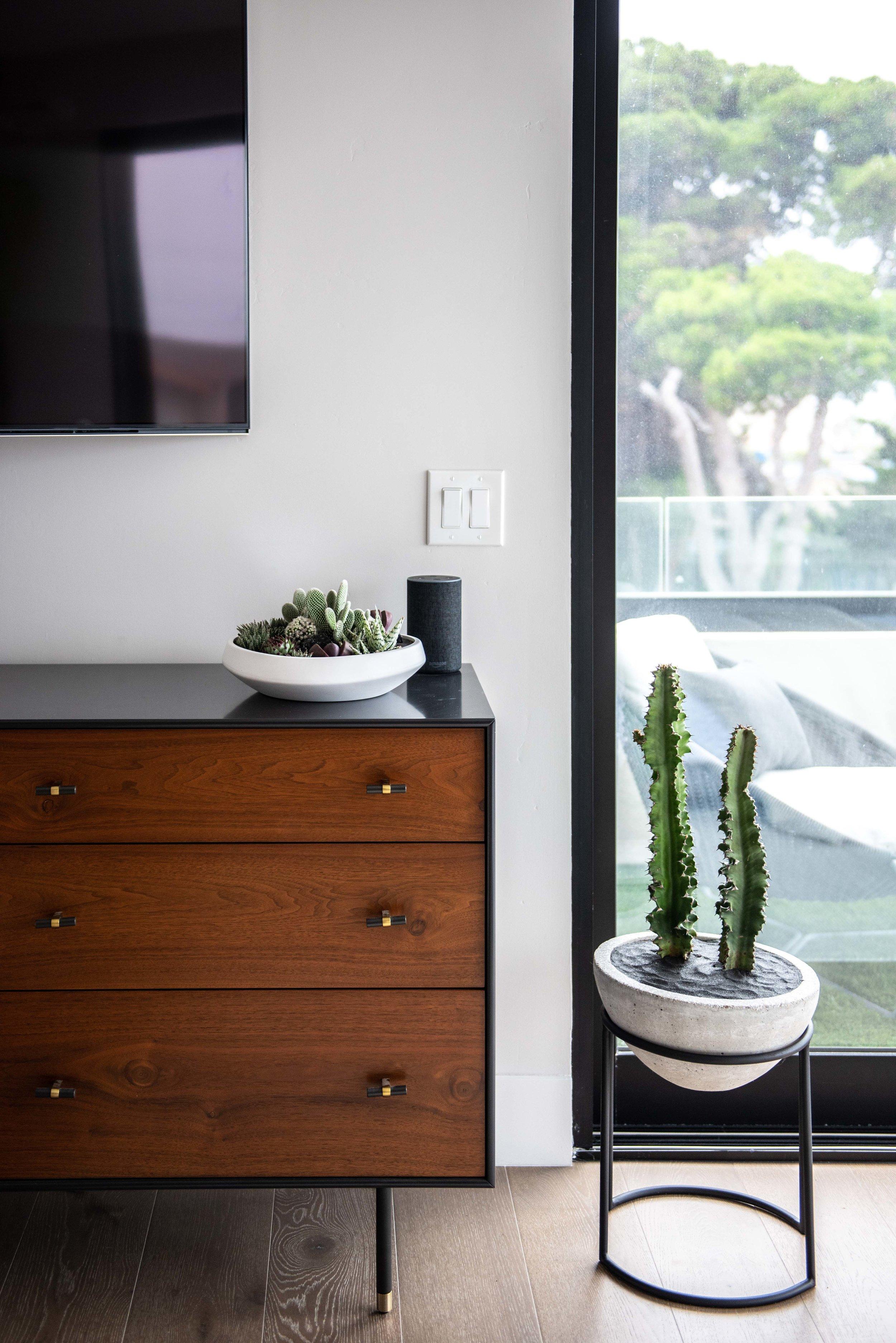interior_plants-7.jpg