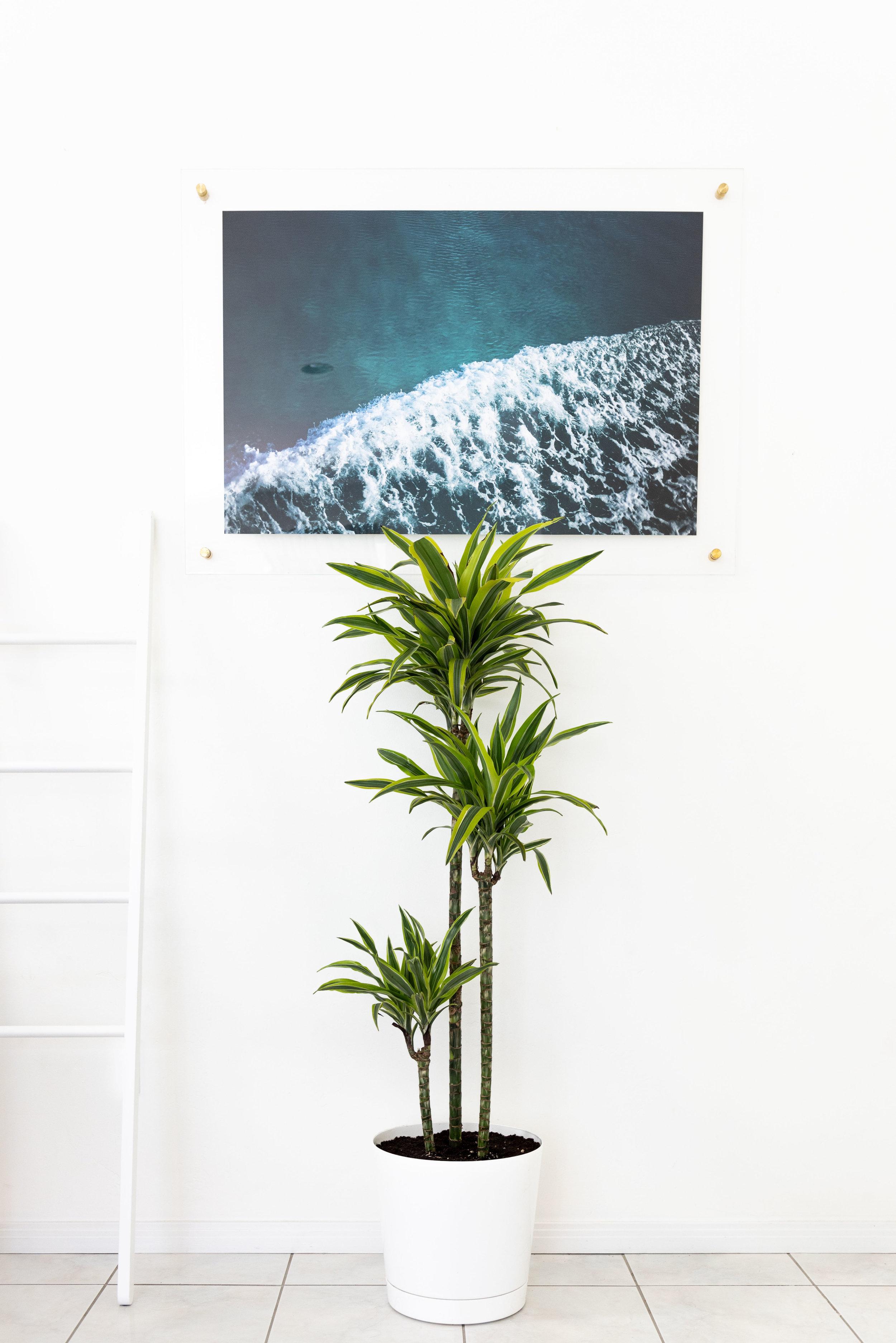 interior_plants-8.jpg