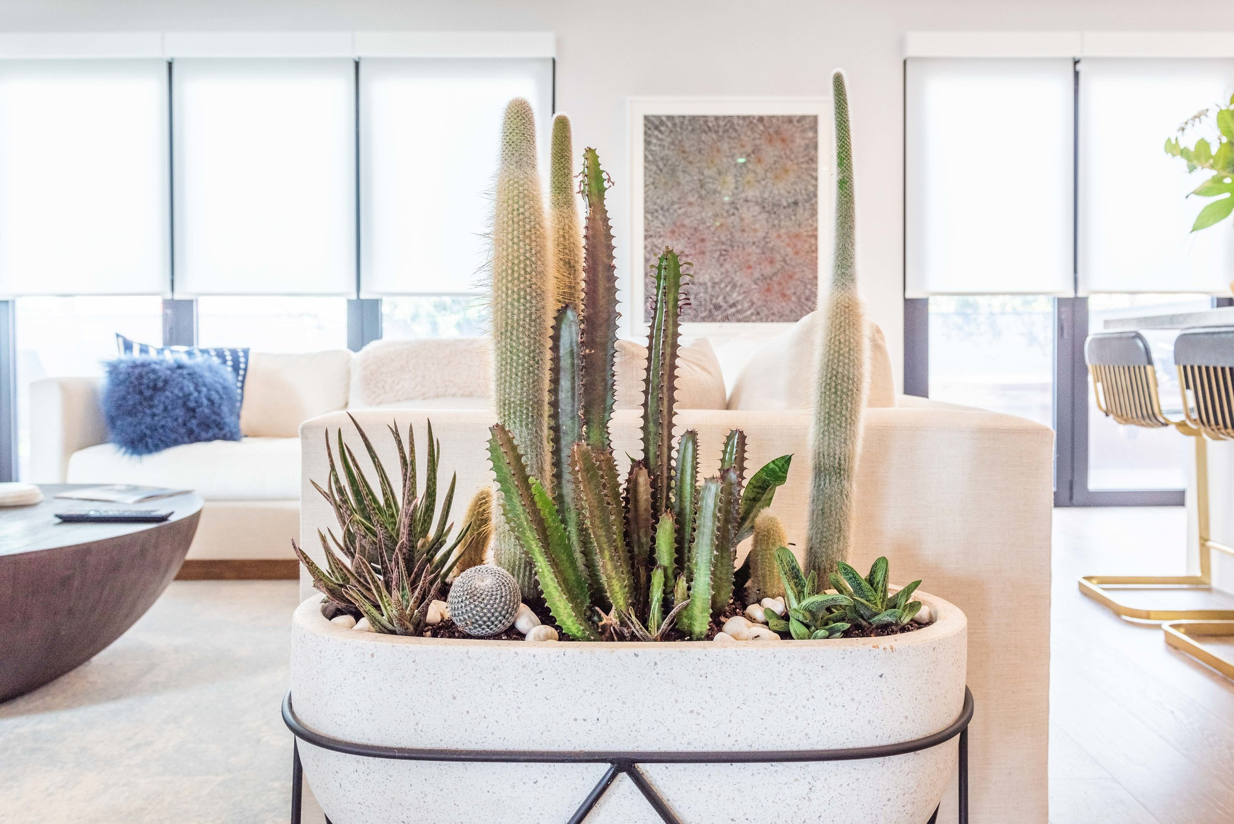 interior_plants-18.jpg