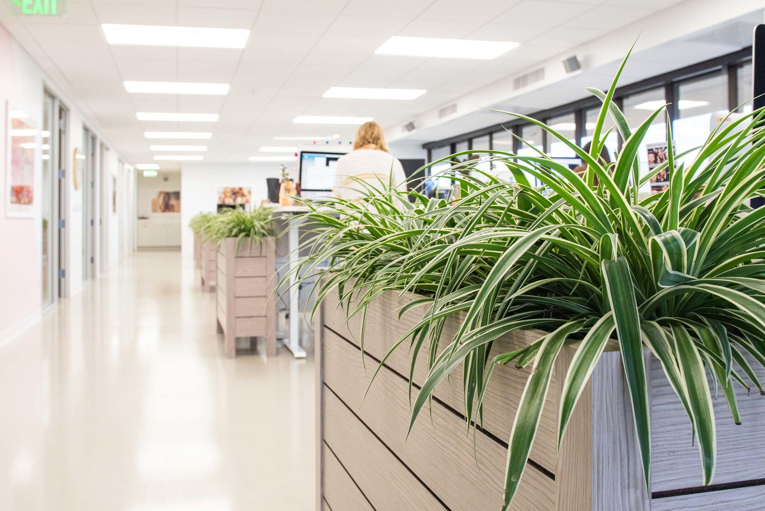 interior_plants-20.jpg