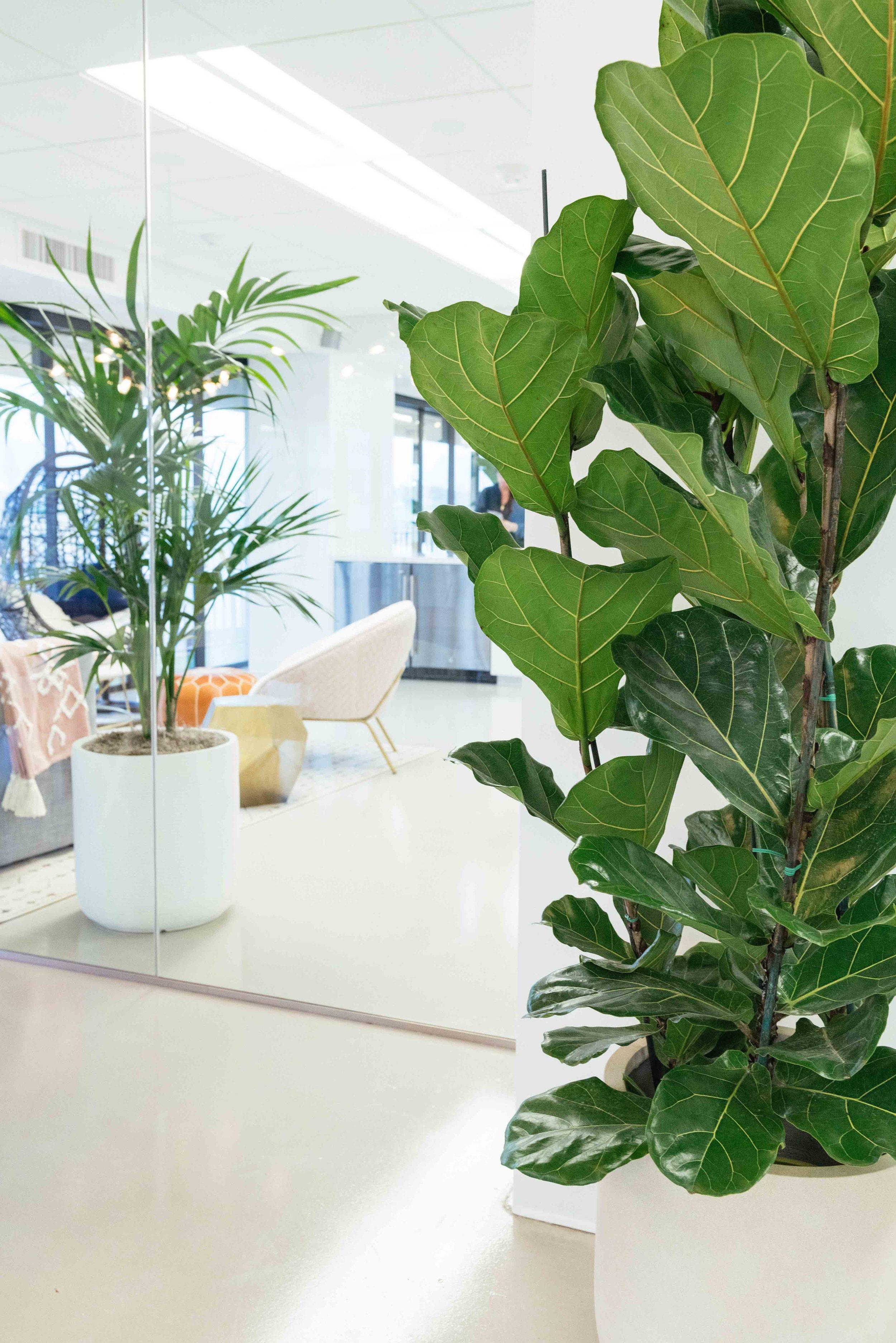 interior_plants-22.jpg
