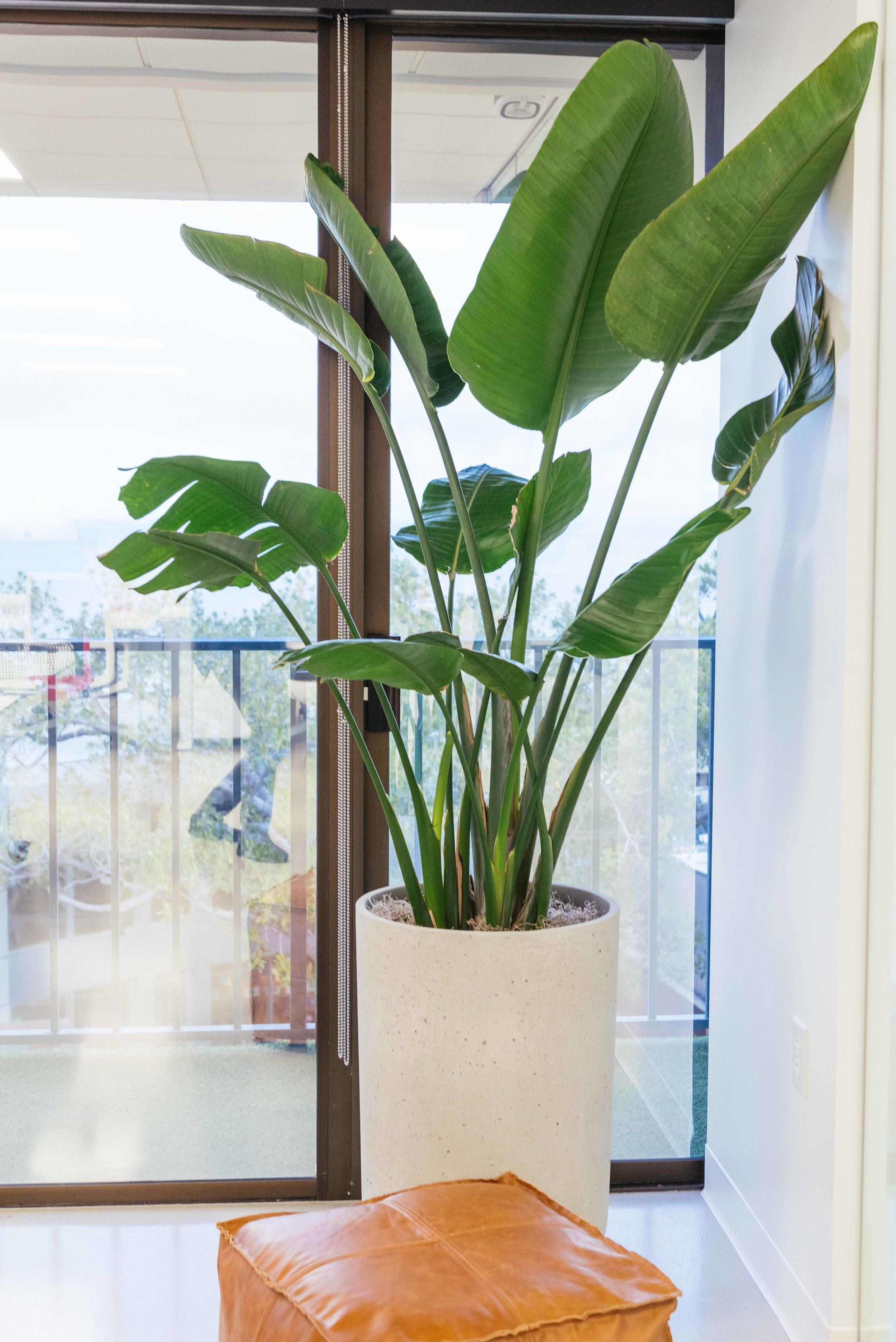 interior_plants-23.jpg