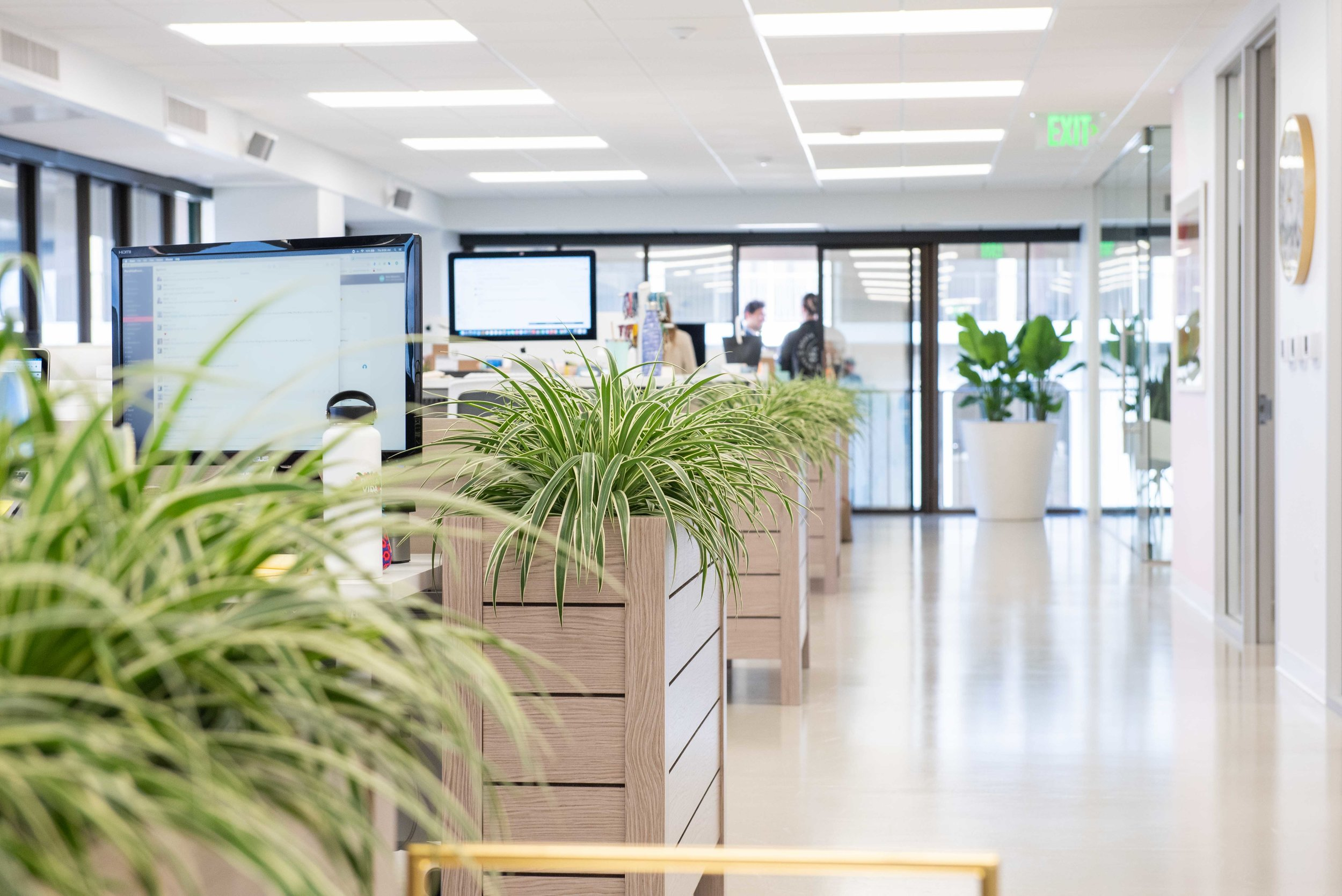 interior_plants-26.jpg