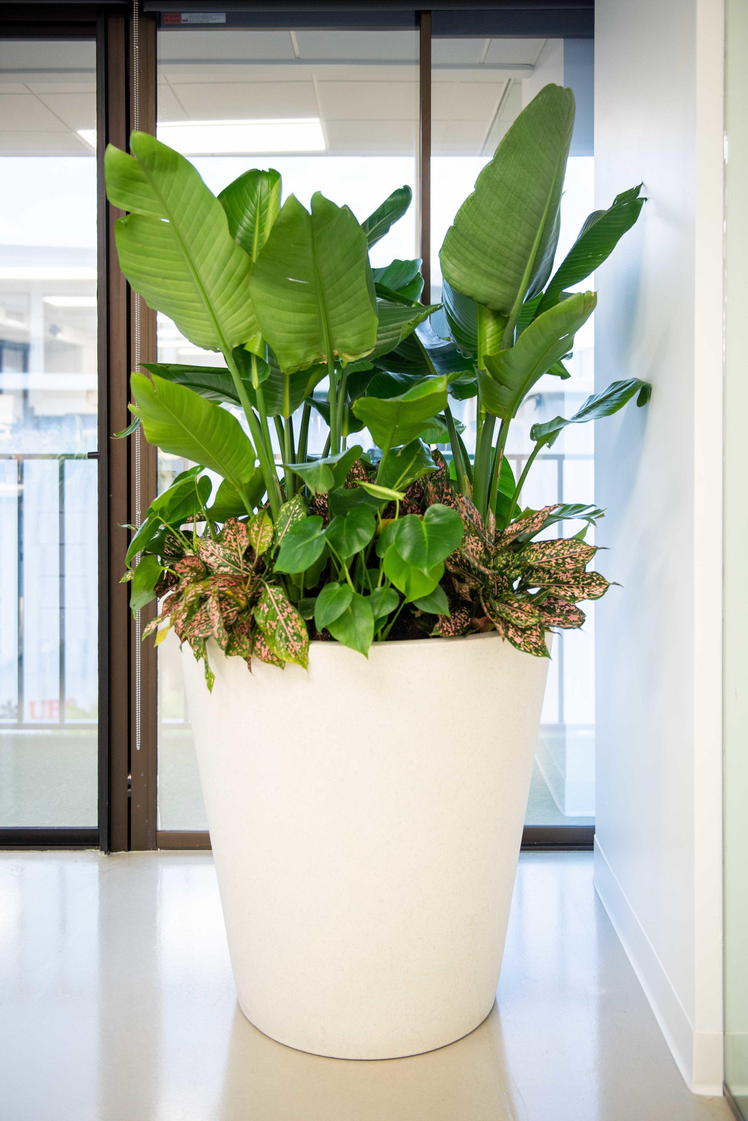 interior_plants-29.jpg