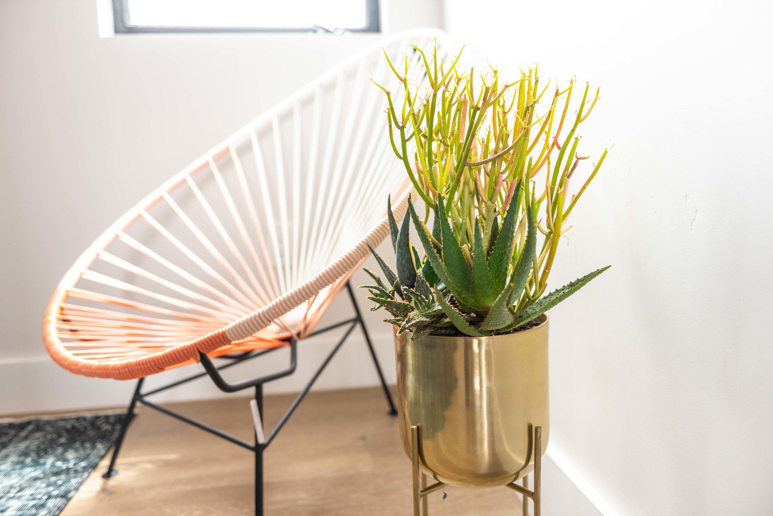 interior_plants-30.jpg
