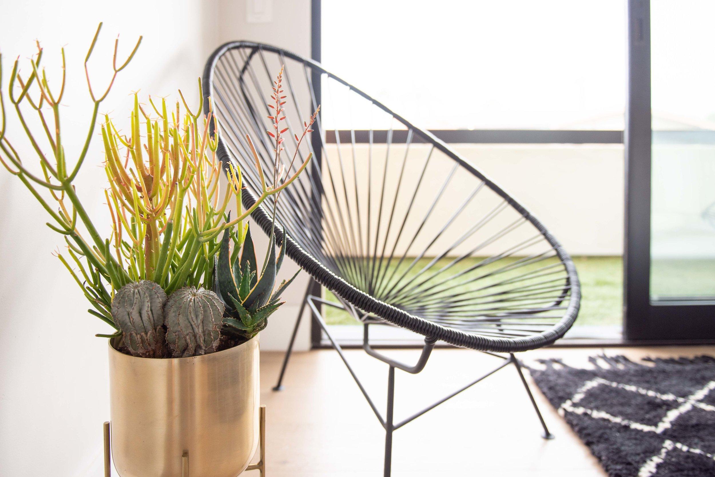 interior_plants-32.jpg