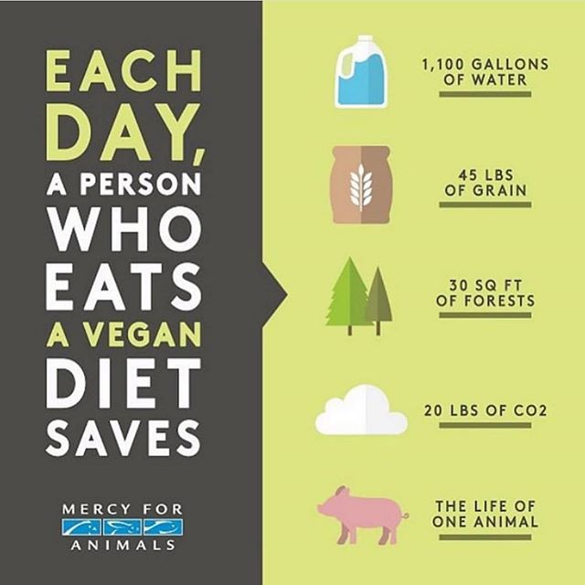 I know I'm a day late for #earthday BUT this is a reminder of how easy it would be for you to significantly help our planet, every. day. It's been 640 days since we both went vegan and we wouldn't have it any other way 🌿 #earthdayvegan
