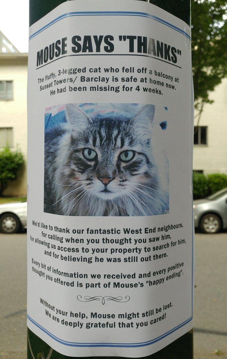 A West End Cat Story .jpg