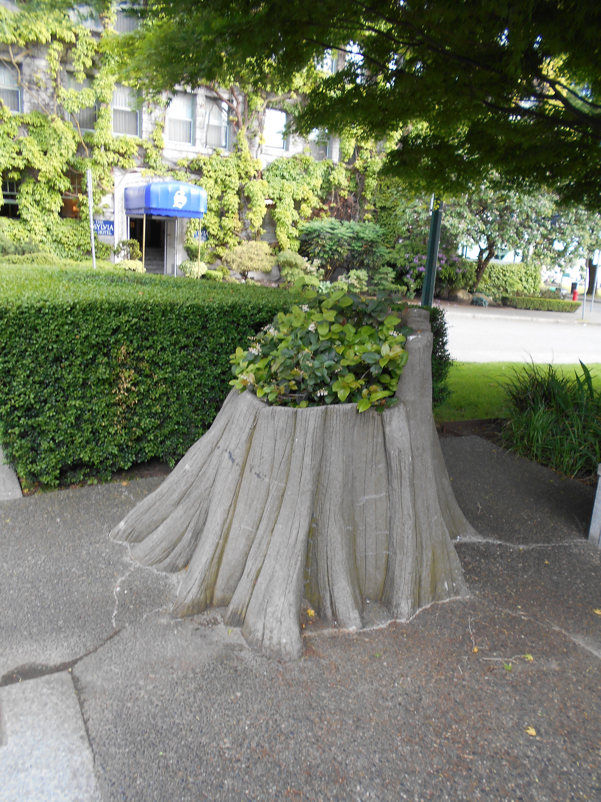 Concrete and floral homage to bygone forest giants?