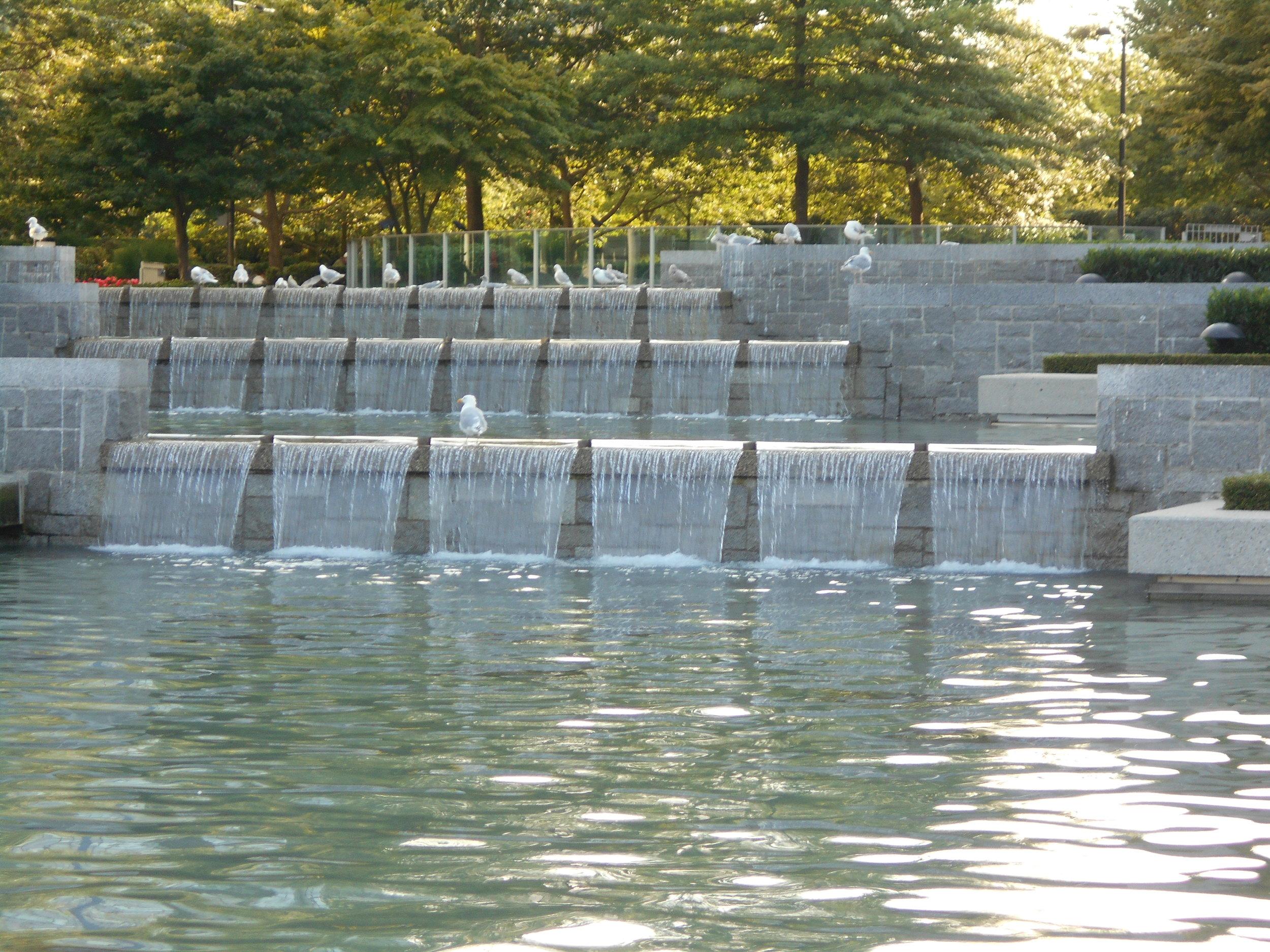 Seagulls love a good waterfall ... like this one near Change restaurant.