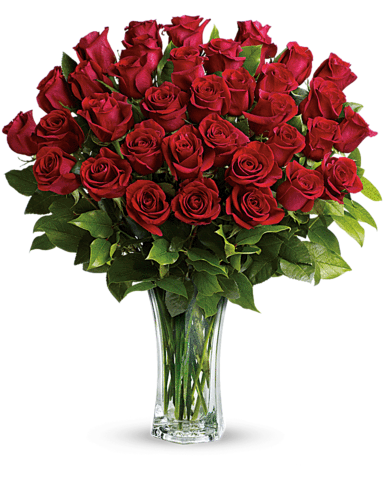 What will climate change do to our love affair with roses … and our calendar of rose-worthy celebrations?