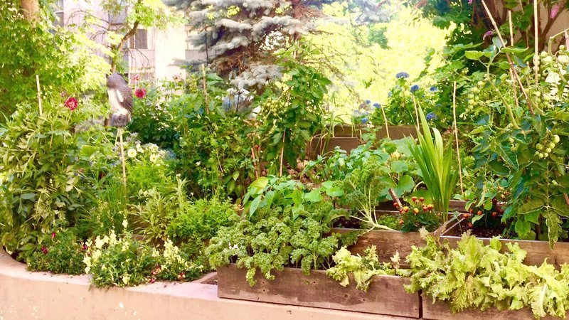 THE LOVINGLY CARED FOR TENANTS' GARDEN AT VILLA CONTESSA IS THE SUBJECT OF A RESIDENTS' PETITION.